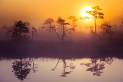 Ett härligt drömlikt morgonlandskap av solresningen ovanför ett dimmigt träsk Färgrik konstnärlig blick Arkivfoton