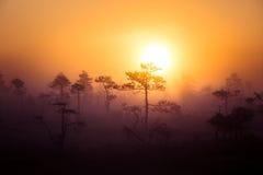 Ett härligt drömlikt morgonlandskap av solresningen ovanför ett dimmigt träsk Färgrik konstnärlig blick arkivfoto