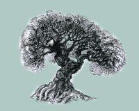 Ett härligt frodigt gammalt träd Fotografering för Bildbyråer