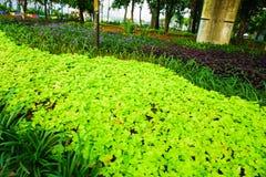Ett härligt grönt litet träd eller växter nära streesida arkivfoton
