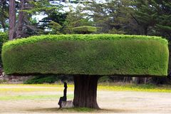 Ett härligt grönt träd som klippas exakt med en kvinna under det arkivfoto