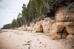 Ett härligt sandstenkustlandskap Träd som växer på klippor ar för en sandsten det baltiska havet Landskap med grottor Arkivbild