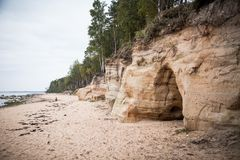 Ett härligt sandstenkustlandskap Träd som växer på klippor ar för en sandsten det baltiska havet Landskap med grottor Royaltyfria Bilder
