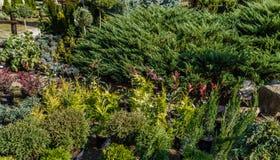 Ett härligt trädgårds- landskap med lotten av olika växter Royaltyfri Bild