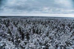 Ett härligt vinterlandskap i nordiska Europa Arkivfoto