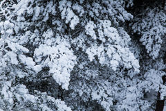 Ett härligt vinterlandskap i nordiska Europa Arkivbild