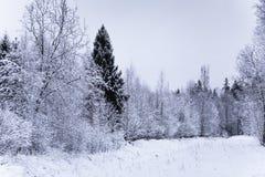 Ett härligt vinterlandskap i nordiska Europa Royaltyfria Foton