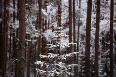 Ett härligt vinterlandskap i nordiska Europa Royaltyfri Bild