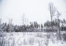 Ett härligt vinterlandskap i nordiska Europa Royaltyfri Fotografi
