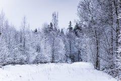 Ett härligt vinterlandskap i nordiska Europa Fotografering för Bildbyråer