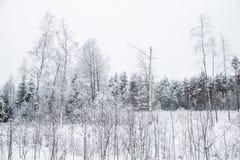 Ett härligt vinterlandskap i nordiska Europa Royaltyfri Foto