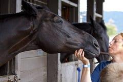 Ett häst- på den rid- showen Fotografering för Bildbyråer