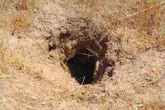 Ett hål i jordningen - som är hem- för ett löst djur Royaltyfri Fotografi