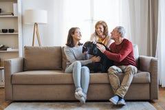 Ett högt par med en tonårs- flicka som hemma sitter på en soffa med hunden royaltyfria foton