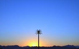 Ett högväxt gömma i handflatan på solnedgången Arkivbild