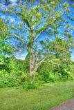 Ett högväxt träd Arkivfoto