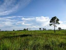 Ett högväxt träd i ett fält av gräs i sommaren arkivbilder