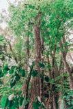 Ett högväxt träd med gröna sidor royaltyfria bilder