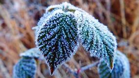 Ett handlag av frost Arkivbild