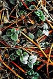 Ett handlag av frost 1 - Skottland Arkivbild