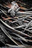Ett handlag av frost 2 - Skottland Arkivbild