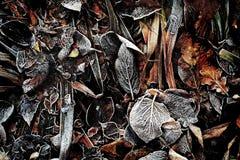 Ett handlag av frost 3 - Skottland Arkivbild