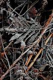 Ett handlag av frost 4 - Skottland Arkivfoto