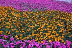 Ett hav av blommor i parkera Arkivbild