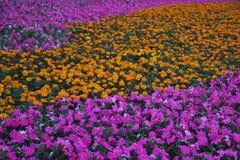 Ett hav av blommor i parkera Royaltyfri Bild
