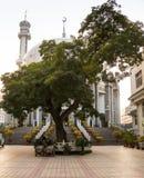 Ett hemtrevligt ställe i den gröna staden parkerar Arkivfoton