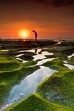 Ett hisnande och härligt naturligt landskap av solnedgången, himlen är orange med en förgrund av någon konturn och korall fotografering för bildbyråer
