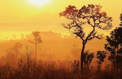 Ett hjärtaformträd i dimman och morgonsolljuset Arkivfoton
