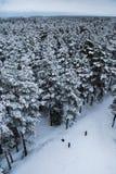 Ett härligt vinterlandskap i nordiska Europa Arkivbilder