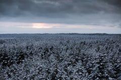 Ett härligt vinterlandskap i nordiska Europa Arkivfoton