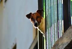 Ett hundhuvud Arkivfoto