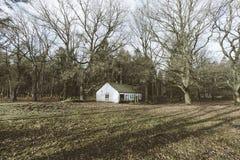 Ett hus i tr?na royaltyfri fotografi