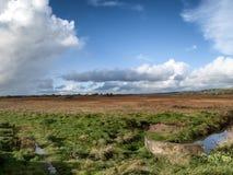 Ett irländskt landskap med en äng och en ström som kör till och med den arkivbild