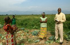 Ett jordbruk projekterar i Uganda. royaltyfri foto