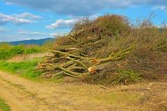 Ett käckt trä Arkivbild