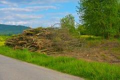 Ett käckt trä Arkivfoto