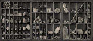 Ett kabinett av kuriositeter royaltyfri foto