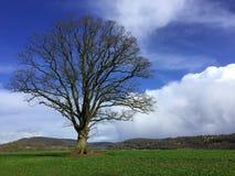 Ett kalt träd i ett fält med kullar i bakgrunden Royaltyfria Bilder