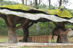 Ett kamelanseende under en sakkunnig formade skjulet Royaltyfria Foton