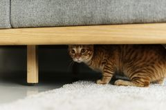 Ett kattnederlag under en soffa royaltyfria bilder
