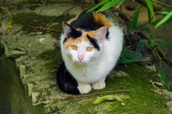 Ett kattsammanträde på en vägg Royaltyfria Foton