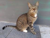 Ett kattsammanträde vid väggen i gatan utomhus Royaltyfri Fotografi