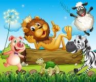 Ett konunglejon som omges med djur royaltyfri illustrationer