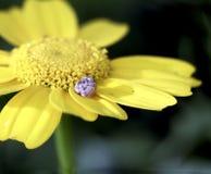 Ett kronblad av en gul blomma med en snigel på ett av kronbladen arkivfoto
