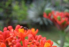 Ett kryp i en härlig trädgård Royaltyfri Foto