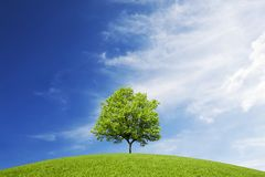 Ett lövfällande träd på en grön kulle under himlen med ovanliga moln royaltyfria foton